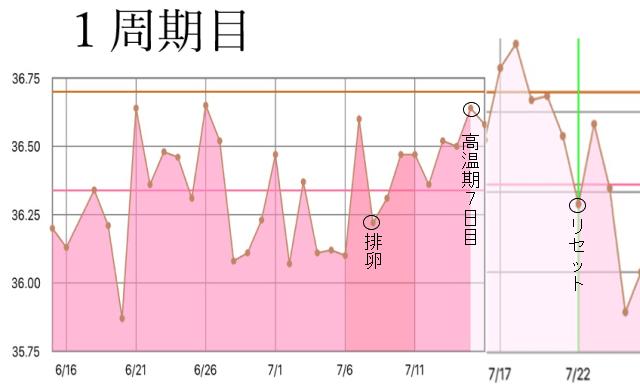 1周期目の基礎体温グラフ